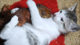 kittysquirrel-thumb-500x293-1735.jpg