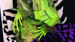 lizardlover-thumb-500x652-1825.jpg