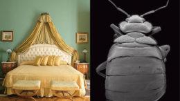 bedbugs-thumb-500x334-2259.jpg