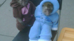 russian-monkeys-jumpsuits.jpg