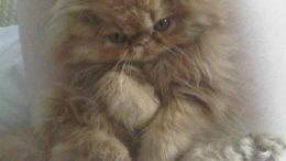 moe-kitten-01-thumb-500x375-3277.jpg