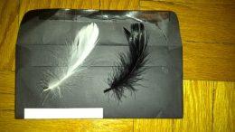 nina-sayers-feathers-thumb-500x375-3435.jpg