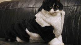 roonie-fur-suit-thumb-500x375-3464.jpg