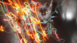 grappa-cat-christmas-lights-thumb-500x375-3617.jpg