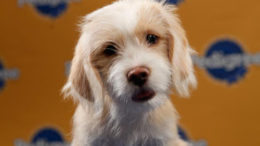 pup1-thumb-500x360-3993.jpg