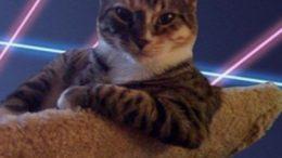 glamour-puss.jpg