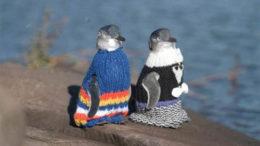 penguin-sweaters-01-thumb-500x328-5817.jpg