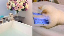 Karl-Lagerfeld-cat-Choupette-Lagerfeld-Twitter-thumb-500x334-7360.jpg