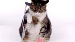 cat_sick_kitten-thumb-500x375-7671.jpg
