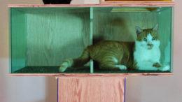 sam-roeck-contemporyartsculptureforcats.jpg