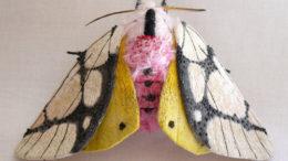 yumi-okita-moths-06-thumb-500x360-20025.jpg