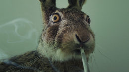 rabbit-stoner-thumb-500x333-24690.jpg