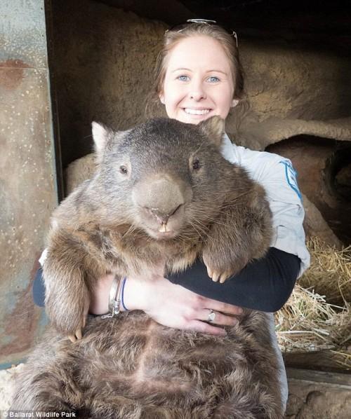 patrick-wombat-03