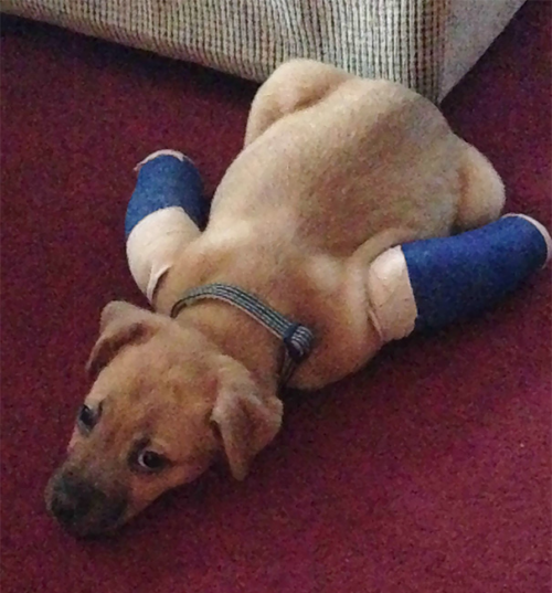 pup-in-casts