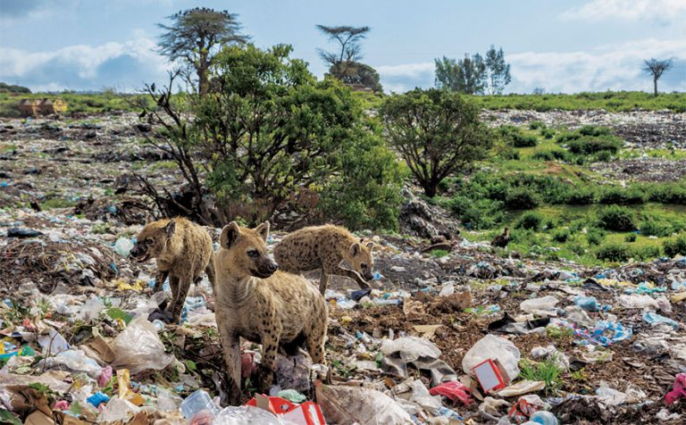 OMG, these new images from National Geographic will stop you from using plastic (hopefully