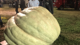 Largest pumpkin 2018