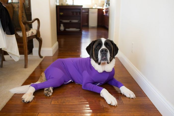 OMG, it's called FASHUN, look it up! Anti-shedding onesies for your pupper