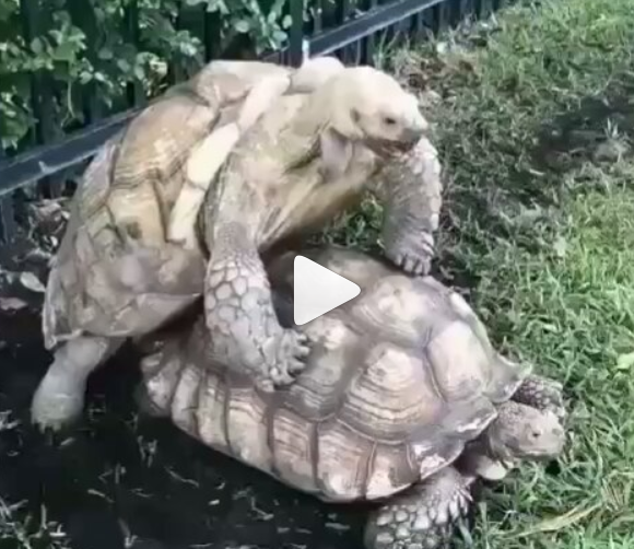 OMG, how embarrassing: Dog interrupts turtle lovers